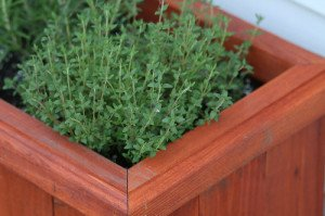 Box planters are attractive, but they are not the most practical way to plant herbs.