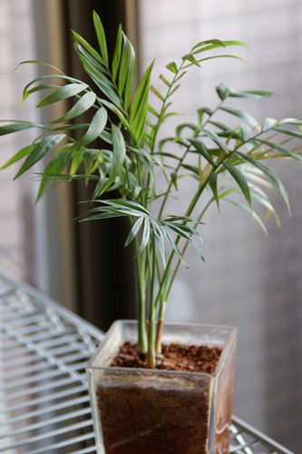 14 truly low light indoor plants indoor plants hq - Low light indoor plant ...