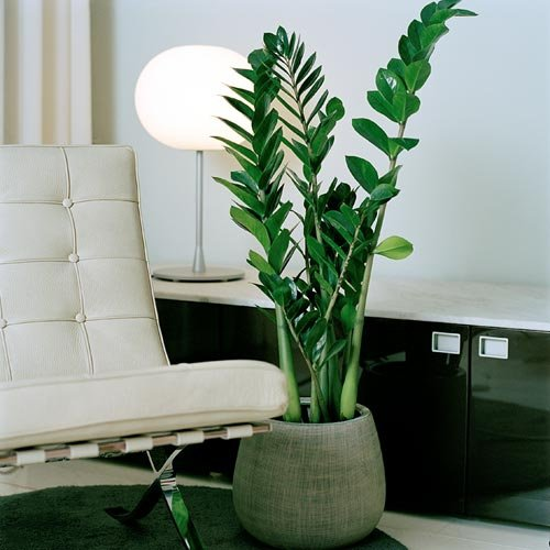 plants for windowless office. 9) zz plant plants for windowless office
