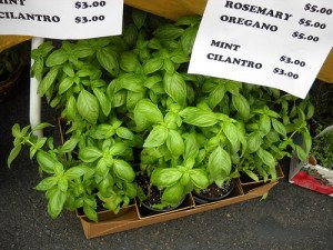 The quickest way to start the indoor herb garden is by purchasing small plants.