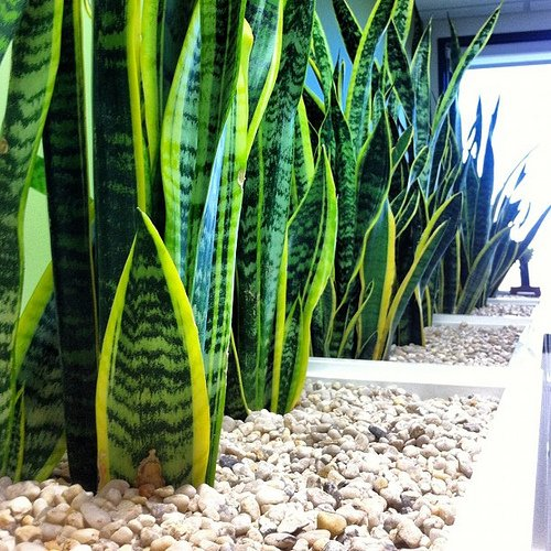 The 7 best office plants revealed indoor plants hq for Office plants no natural light