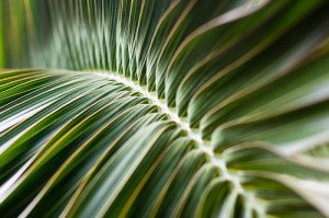 indoor palm trees